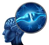 Phasen ZAT, Neurofeedback ZAT, Psychotraumatologie ZAT Köln